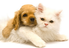 healthy water for dogs and cats